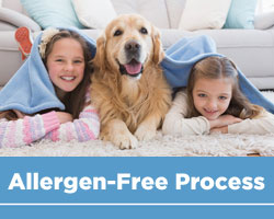 Allegren Free Carpet Cleaning