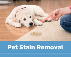 Pat Stain and Odour Removal