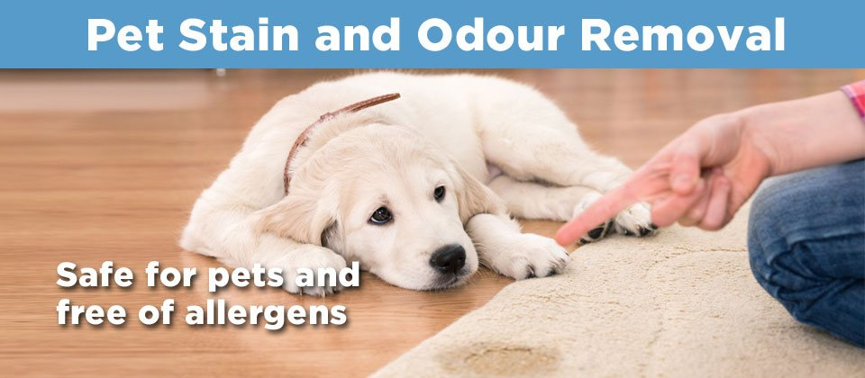 Pet Stain Banner